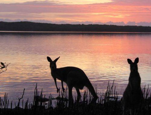 Wildlife of Lake Weyba