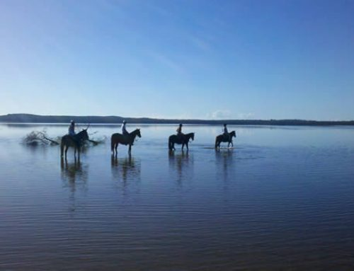 Activities – Horse riding on Lake Weyba